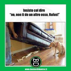 Niente #osso per Rufus #bastardidentro #cane #ipnoticamentebastardidentro www.bastardidentro.it