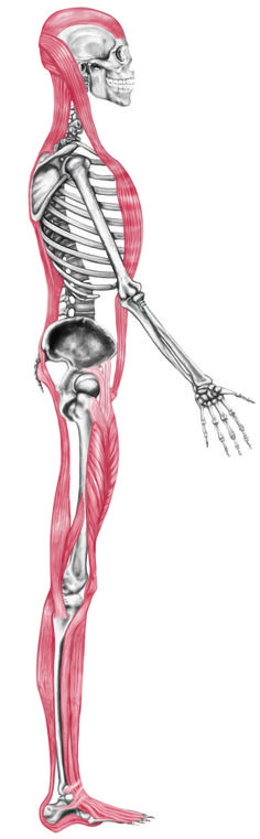 Stop Stretching Your Hamstrings!
