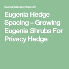 Eugenia Hedge Spacing – Growing Eugenia Shrubs For Privacy Hedge