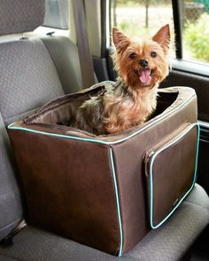 Get ready to have the summer of a lifetime with your furry companion. From Martha's own doggy fitness toys to a list of our favorite fur-friendly hotels, we've got you covered.When driving your dog to the park or taking her along on a family road trip, getting there safely is your #1 priority. This traveling booster seat is lined with soft fleece and secured with a seat belt. It even has a zipper in front for storing toys and treats. Buy the Doggy Booster Seat Online