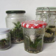 The Basics of Closed Jar Terrariums