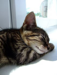 Don't you wish you could sleep like this little kitten?