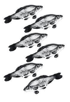 fish shoal illustration pen