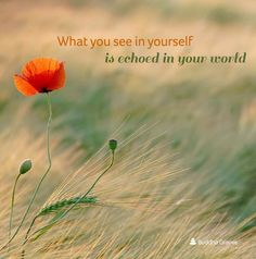 What you see in yourself is echoed in the world.