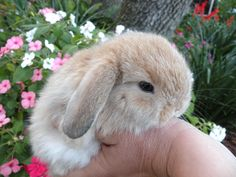 we are family owned and operated. our rabbitry offers pet or show quality rabbits from registered gr...