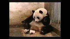 History - YouTube Skyrim, Panda Bear, Comedy, History, Funny, Youtube, Animals, Life, Historia