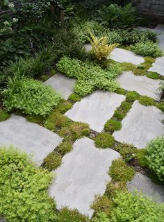 Outdoor Landscaping, Outdoor Gardens, Outdoor Decor, Urban Garden Design, Woodland Plants, Garden Stepping Stones, Growing Gardens, Garden Steps, Garden Images