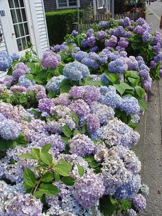 Gorgeous! I love this so much...  Reminds me of my mother's hydrangeas