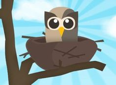 nested owl