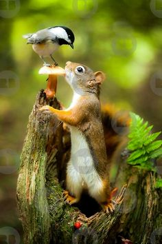 Red Squirrel & Black-Capped Chickadee are some of the many wildlife to be found in the French River, Ontario. Nature Animals, Animals And Pets, Baby Animals, Funny Animals, Cute Animals, Smiling Animals, Funny Birds, Beautiful Birds, Animals Beautiful
