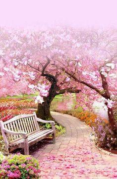 #bellissimi #fiori ❤