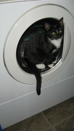 Such a tiny kitten - so cute sitting on the outside lip of the dryer!