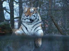 Korkeasaari Zoo. Helsinki, Animals, Animales, Animaux, Animal, Animais
