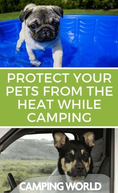 Going camping with your pet is a fantastic way to make the most of your trip. However, you need to make sure your pet keeps from getting overheated while camping. Camping Games, Camping Activities, Go Camping, Dog Travel, Camping World, Rv Life, Travel Alone, Happy Campers, Your Pet