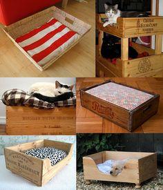 caixa para gatos.