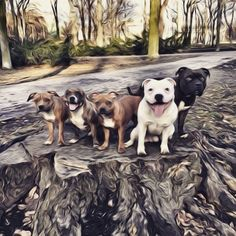 The Start Of Self Control Pit Bull Dogs Pinterest Pit Bull - This dog has some serious self control that will make you laugh