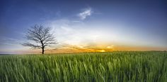 ny solnedgang