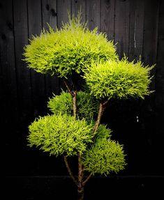 Outdoor Topiary, Outdoor Decor, Small Gardens, Outdoor Gardens, Garden Art, Garden Plants, Asian Garden, Botanical Gardens, Bonsai