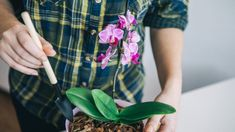 4 Type 4, Garden Projects, Orchids, Mix, Youtube, Tree Branches, White Orchids, Creative Crafts, Wood