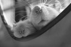 I used to love seeing my boys lying in their hammocks.