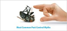 Common Pest Control Myths That You Should Ignore Most Common, Pest Control, Things To Come, Homes, Blog, Houses, Home, Blogging, Bed Bugs Treatment