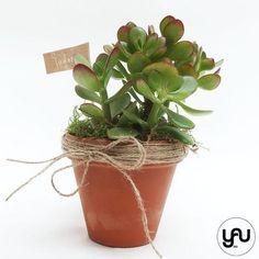 MARTURII plante suculente in suport din teracota - M6 - https://www.yau.ro/collections/marturii-nunta-si-botez?page=1 - yauconcept - elenatoader