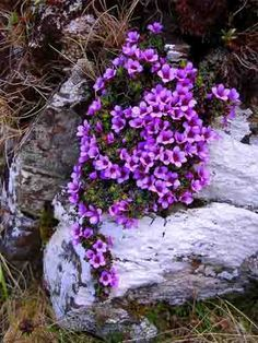 bring in a rock or two and add a touch of color with flowers planted in the crevices.