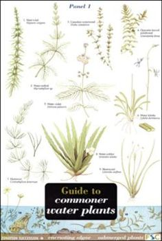 'Guide to Commoner Water Plants' These all-weather fold-out reference guides are perfect for those seeking to learn more about UK species. Used by children, walkers and professionals alike.   This guide features the plants you are most likely to spot in ponds and streams.
