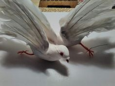 Another image of the birds.