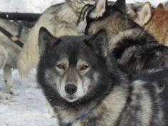 Delta County, Colorado's Grand Mesa Goes to the Dogs | FIDO Friendly