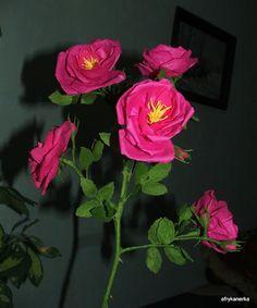Rosa rugosa z bibuły