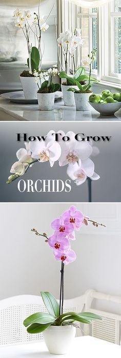 How to Grow Orchids • Great tips and Ideas!