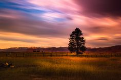 Lonely tree - The colours in this sunset were spectacular, one of the best I have every scene. I bumped the vibrance up them a little in Lightroom but overall, these are the colours that appeared that evening.