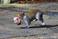 squirrel_moving.