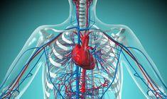 7 Best Of the Cardiovascular System Worksheet- The Cardiovascular System Worksheet . 7 Best Of the Cardiovascular System Worksheet . toxoplasma Modulates Signature Pathways Of Human Epilepsy - Diabetic Retinopathy, Belgian Grand Prix, Health Site, Heart Rhythms, Pulmonary Hypertension, Vascular Disease, Circulatory System, Cardiology, Blood Vessels