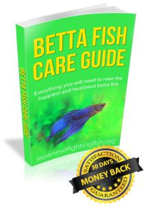 1000 images about betta fish pictures on pinterest for Betta fish care guide