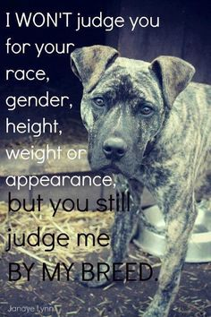 "So sad!! We had a pit bull breed growing up, she was the happiest dog on the planet, quite gullible too. I loved her, she wouldn't hurt a butterfly! I wish people would just not judge this poor dog breed because of a few bad apples. And even the bad apples, it's not their fault it's the owner/trainer.  I quote karate kid, ""there is no bad student, only bad teacher."""