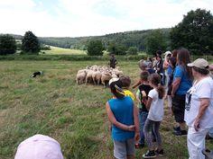 9.7.2016 - Sommerfest  Hütevorführung von Jo Seipel