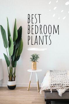 Houseplants can make any room feel like a home, but did you know that many houseplants also have air purifying properties? Here are some of the best air purifying plants. Inside Plants, Cool Plants, Air Plants, House Plants Decor, Plant Decor, Best Plants For Bedroom, Plants For Living Room, Plants For Bathroom, Kitchen Plants
