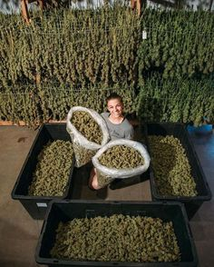 To order weed online visit...https://www.legalcannabissupply.com Text/Call (720) 634-6937 E-mail:legalcannabissupply@gmail.com