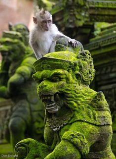 Formal Garden Design, Asian Sculptures, Monkey King, Amazing Nature, Rock Art, Sculpture Art, Samurai, Concept Art, Scenery