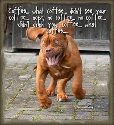 funny pet pictures with captions | Funny dog running hyped on coffee Funny dog photo with caption