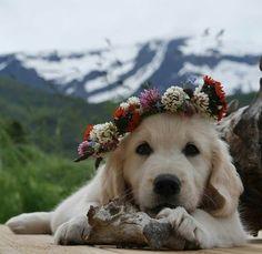 Cãozinho fica bem com flores.
