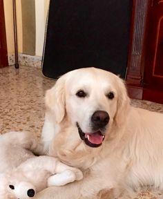 Maxi, dos años con juguete para morder