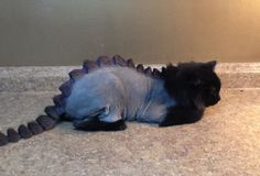 This pet salon will shave your cat into a dragon.  (I bet Tonks would LOVE this. [snerk])
