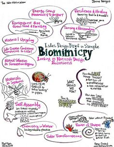 In this inspiring talk about recent developments in biomimicry, Janine Benyus provides heartening examples of ways in which nature is already influencing the products and systems we build. Biomimicry Architecture, Biophilic Architecture, Landscape Architecture, Biomimicry Examples, Tech Art, Greek Words, Be A Nice Human, Sustainable Design, Thoughts