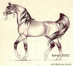horses drawings - Google Search
