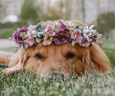 Rufio the Golden Retriever Animals And Pets, Baby Animals, Funny Animals, Cute Animals, Dog Photos, Dog Pictures, Followers En Instagram, What Kind Of Dog, Cute Dogs And Puppies