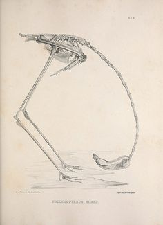 #scientific #bird #skeleton