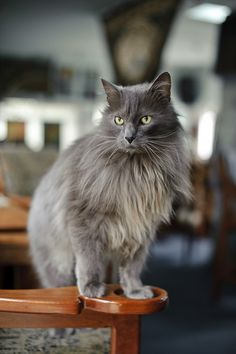 ラブリー-KittyCats、89cats:FlickrでConnor.Fergusonによる猫。